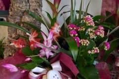 composizione-piante