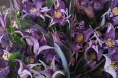 fiori-recisi_06