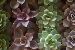 piante-grasse