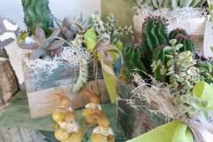 piante_15